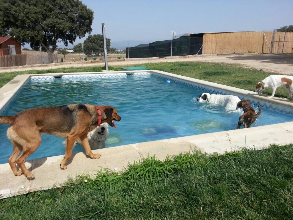 Los huéspedes en la piscina