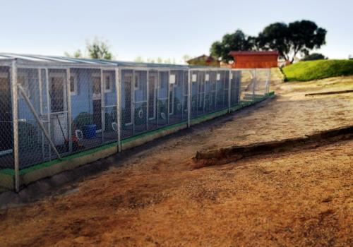Campamento de mascotas | Residencia de Mascotas