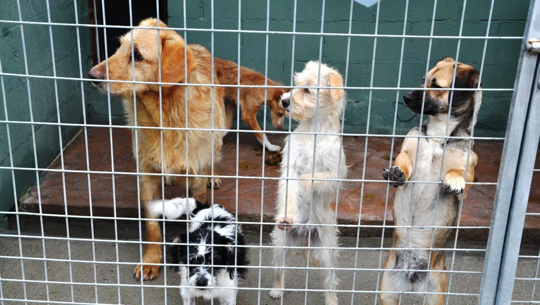 Zooterapia, animales que ayudan a personas