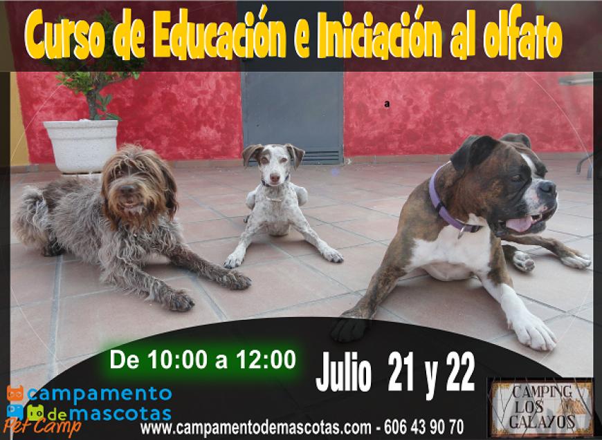 CURSOS EN CAMPING LOS GALAYOS: ADIESTRAMIENTO Y OLFATO (21-22 Julio)