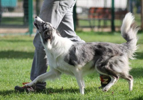 Adiestramiento y educacion canina en madrid