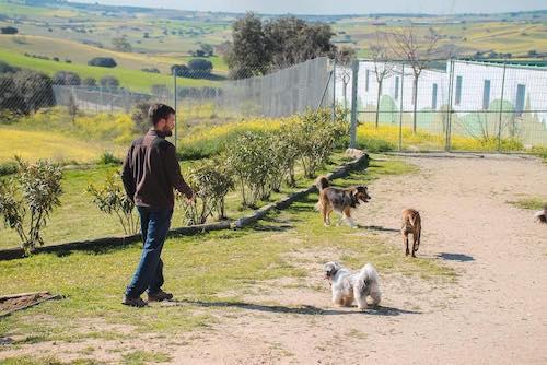 Residencia canina en Madrid 10