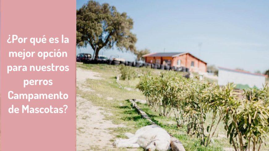 ¿Por qué es la mejor opción para nuestros perros Campamento de Mascotas?