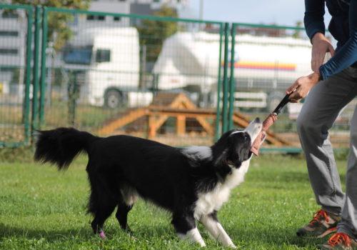 educacion canina madrid