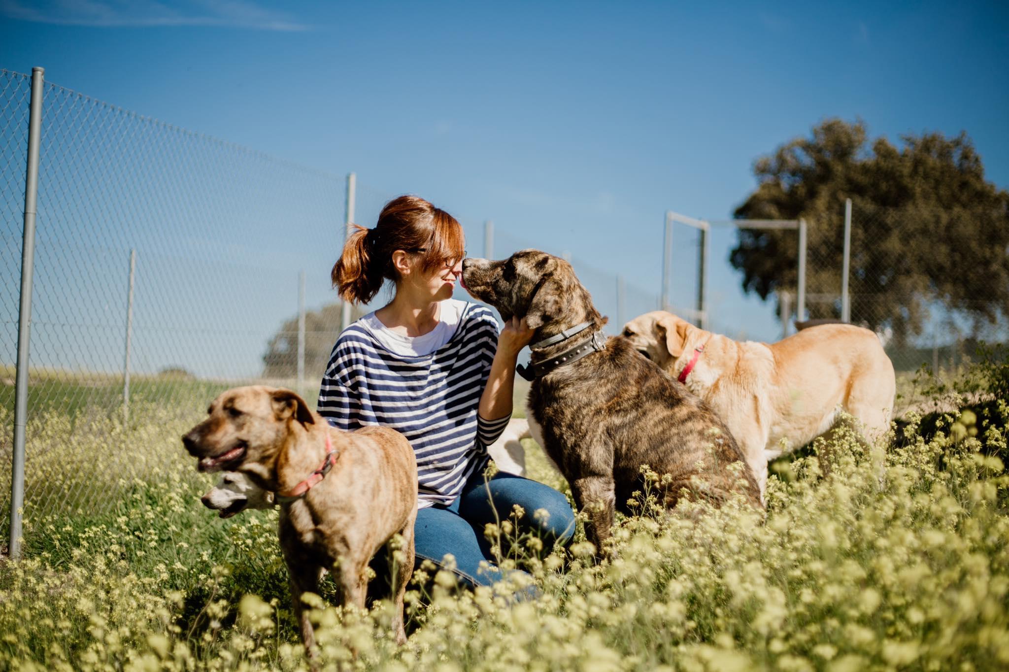 Residencia canina en El Boalo 4