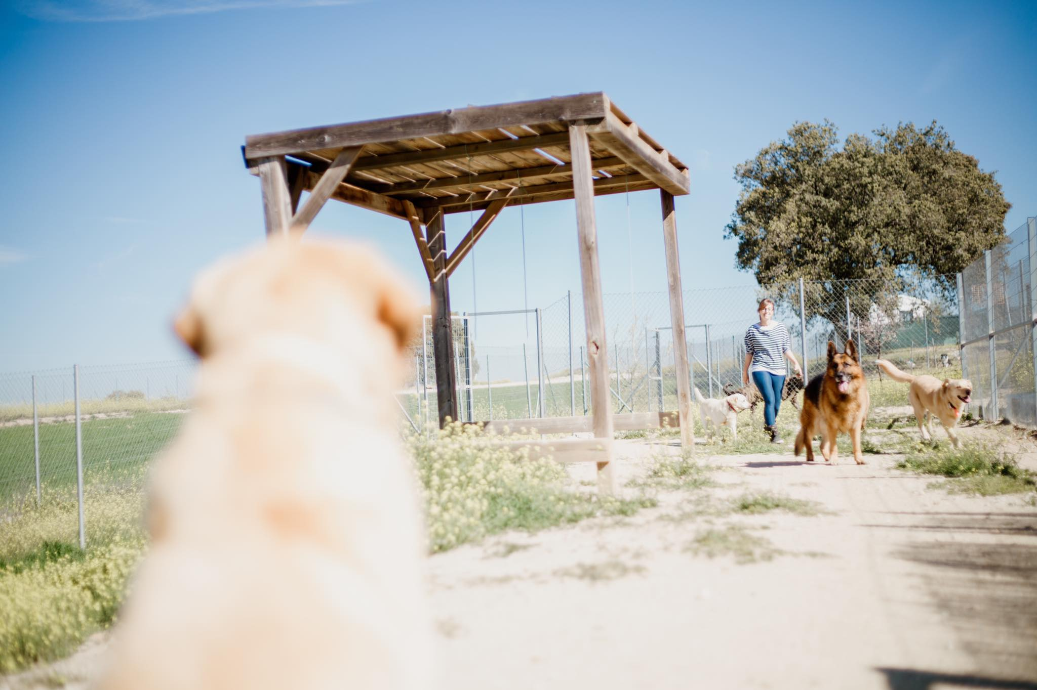 Residencia canina en Valdaracete 2