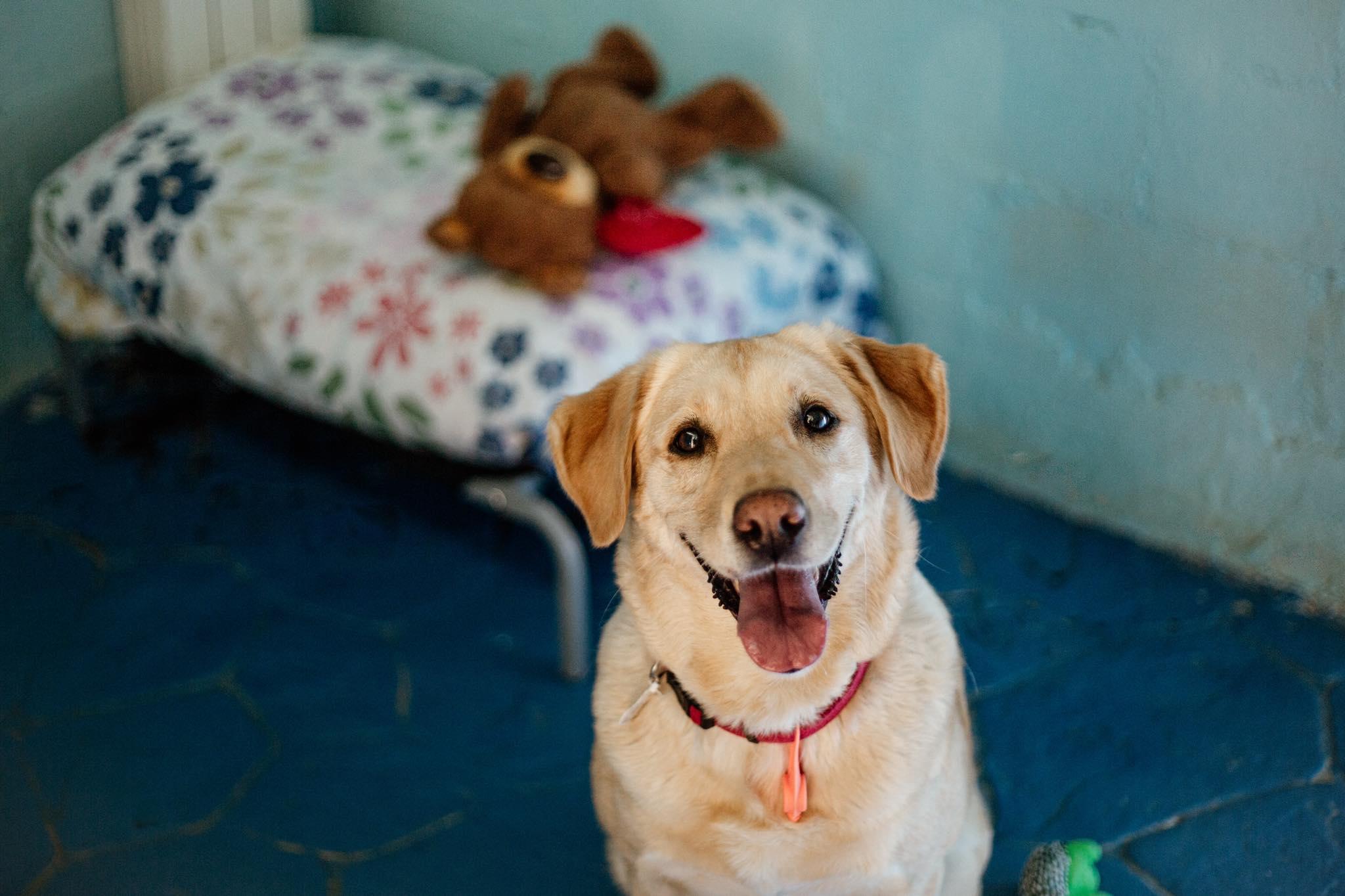 Residencia canina en Méntrida 2
